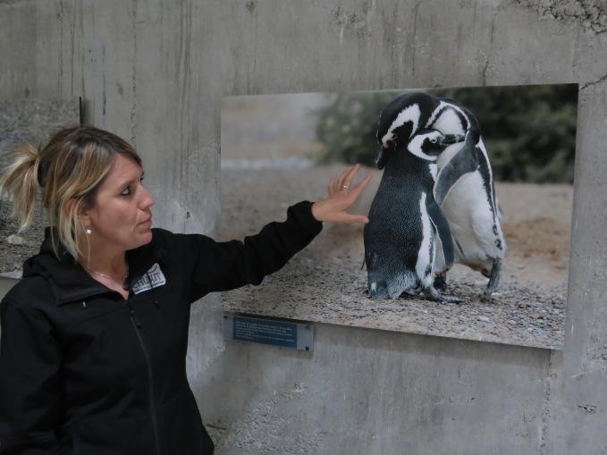 guia pinguinos