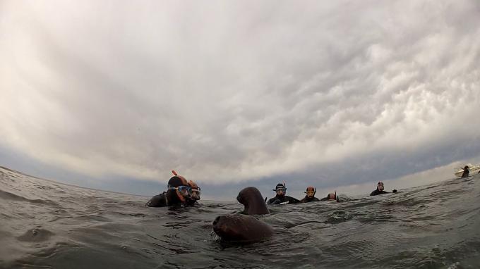lobos snorkeling 1