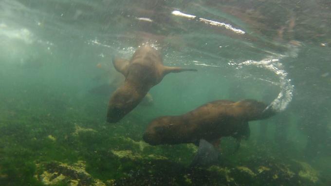 lobos snorkeling 2
